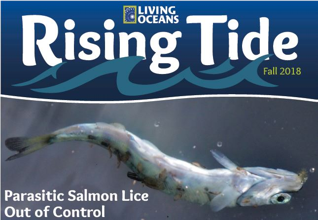 Rising Tide Fall 2018