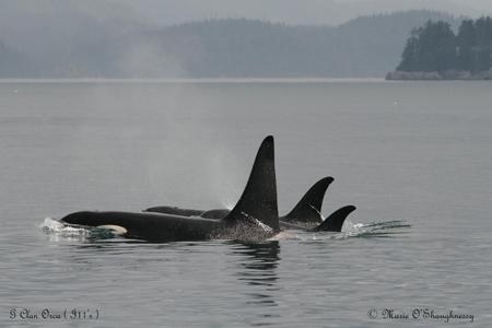 Orca Habitat | Living Oceans