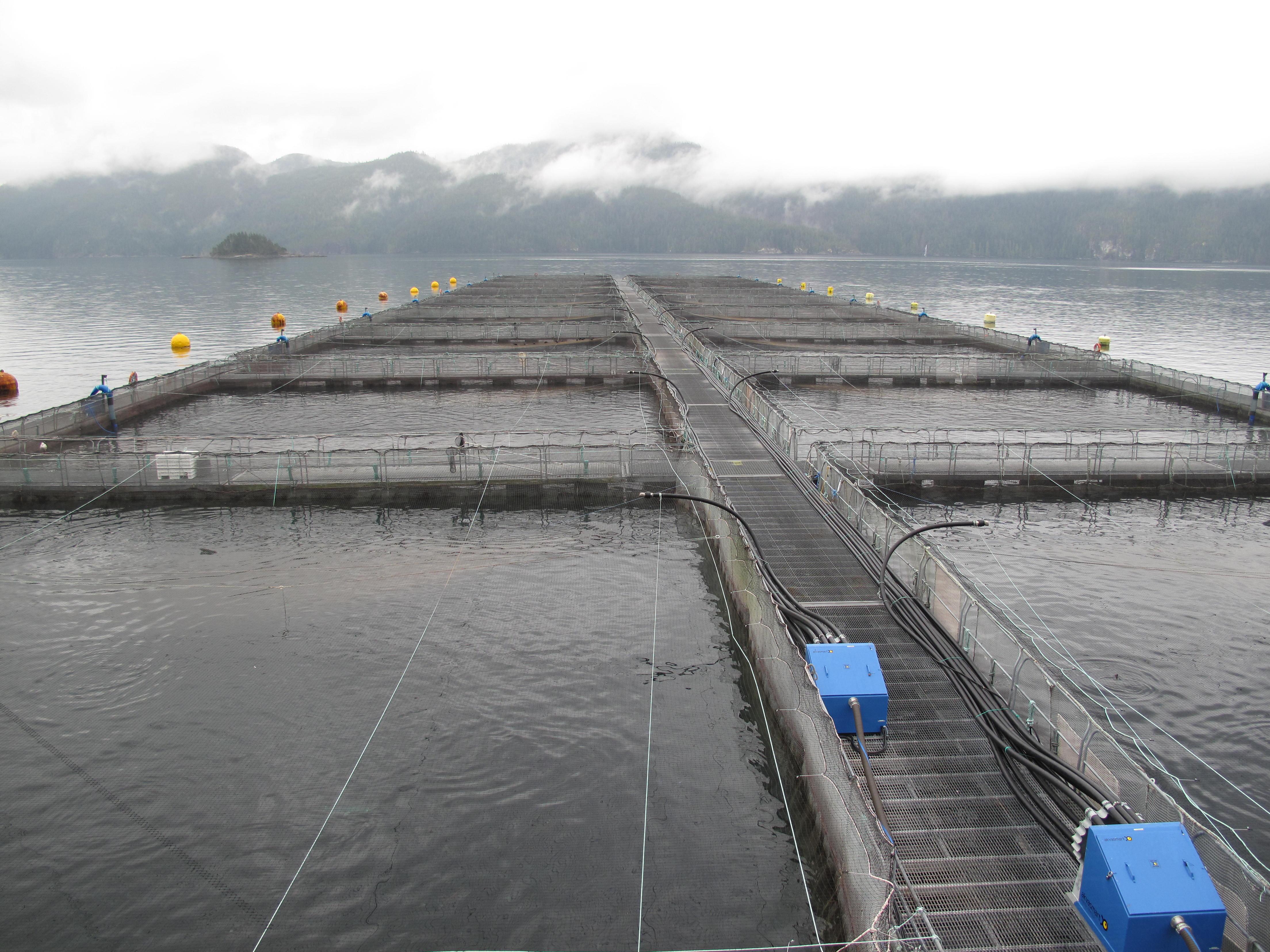 Washington state salmon farms all but history living oceans for Piscine reovirus