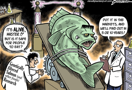 Genetically modified salmon decision cloaked in secrecy living oceans cartoon by steve greenberg greenberg art used here with artists permission more environmental cartoons by steve greenberg at publicscrutiny Choice Image