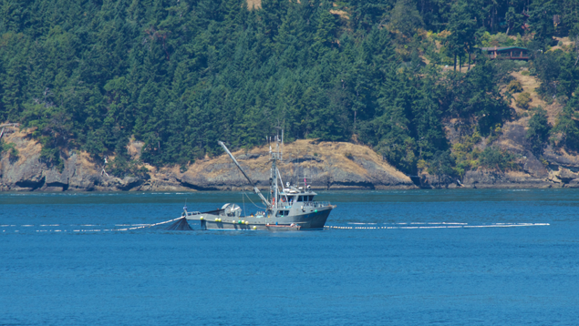 Fishing boat setting a purse seine