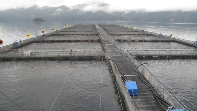 Open-net salmon farm