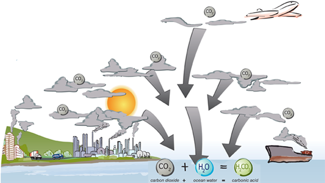 Comment le CO2 se retrouve dans l'océan