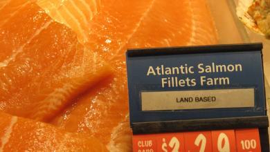 Atlantic salmon filets