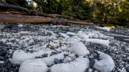 Useless oil booms pollute Heiltsuk beaches_photo Heiltsuk Nation_April Bencze