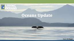 Oceans Update October 2020