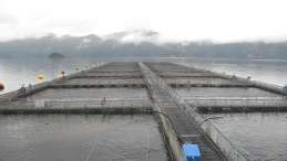 Open-net salmon farm