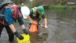 Scientists assessing the damage done to freshwater mussels in the Kalamazoo River